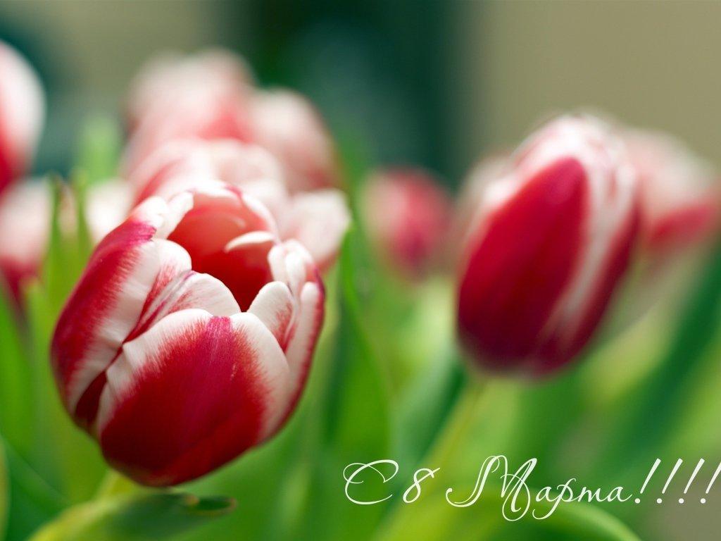 Поздравляем наших любимых посетительниц с 8 марта!!!